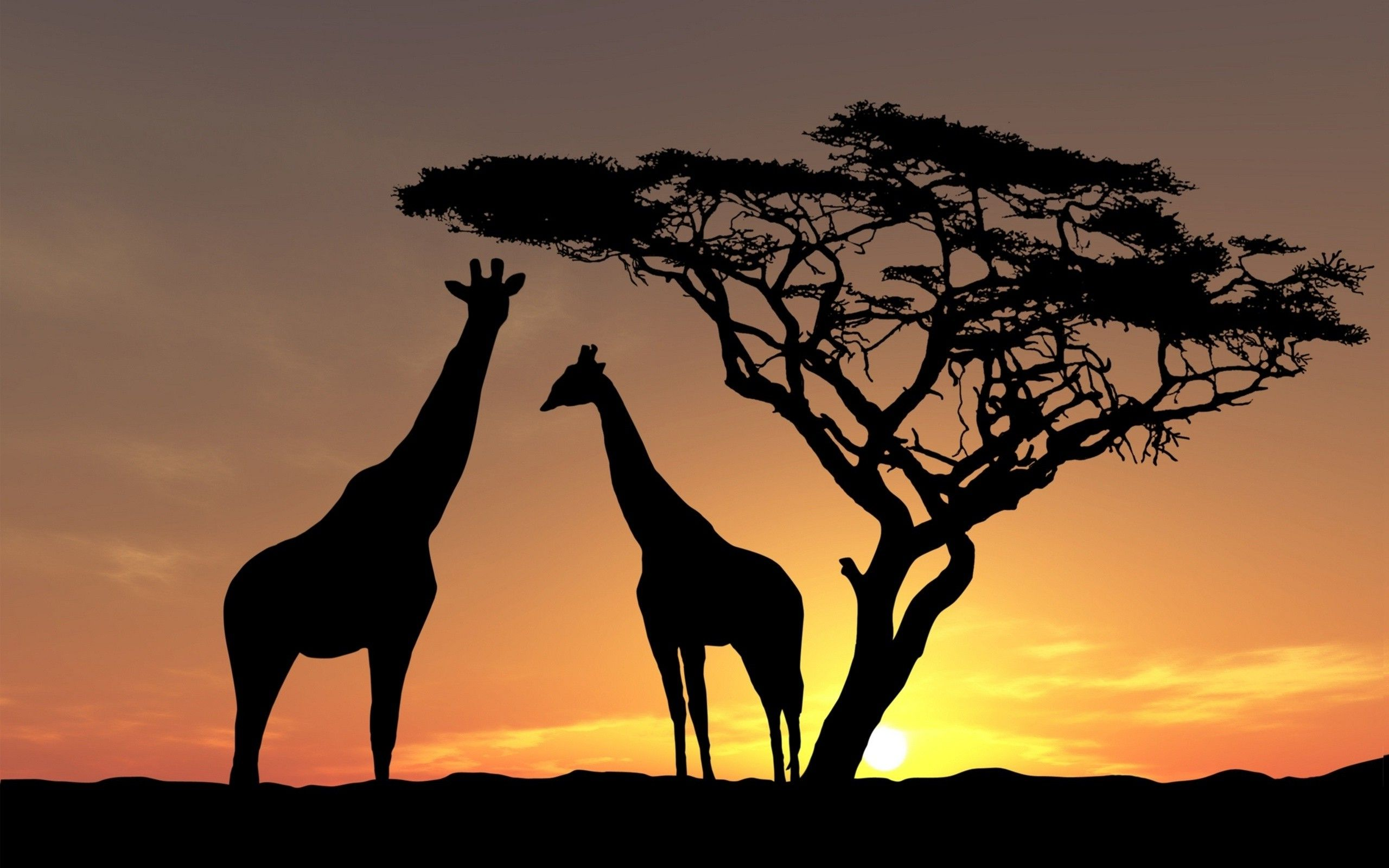 nature Landscape Animals Trees Sunset Silhouette Africa