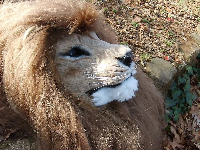 Realistic Animatronic Lion Mask with stereo night vision and amplified hearing