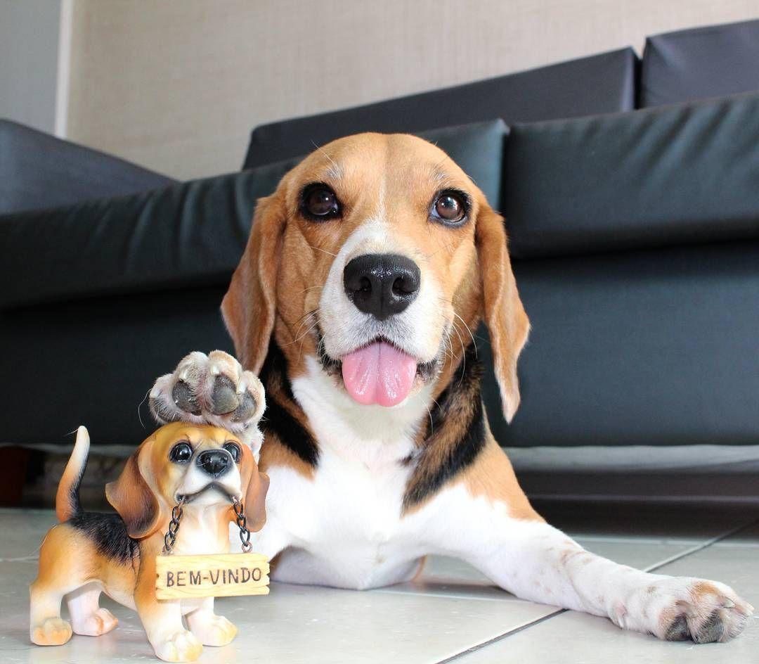 Pin Em Beagles Toys R Us Mini Me