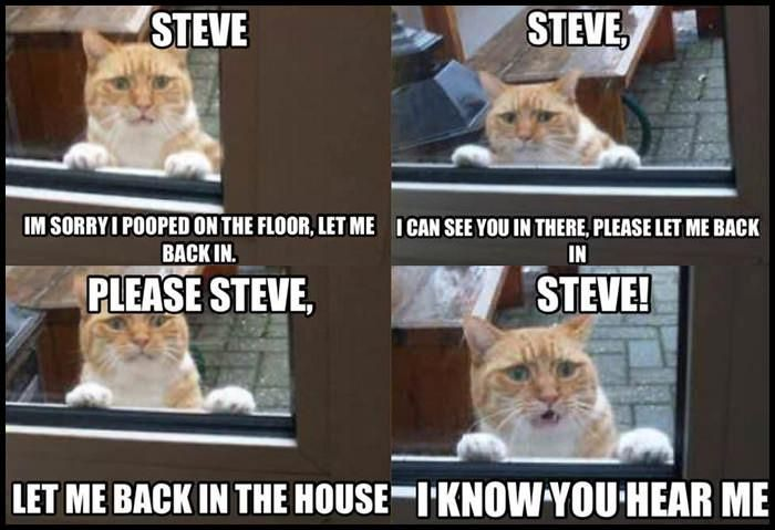 I Know You Hear Me Steve Really Funny Pictures Funny Images Funny Animals