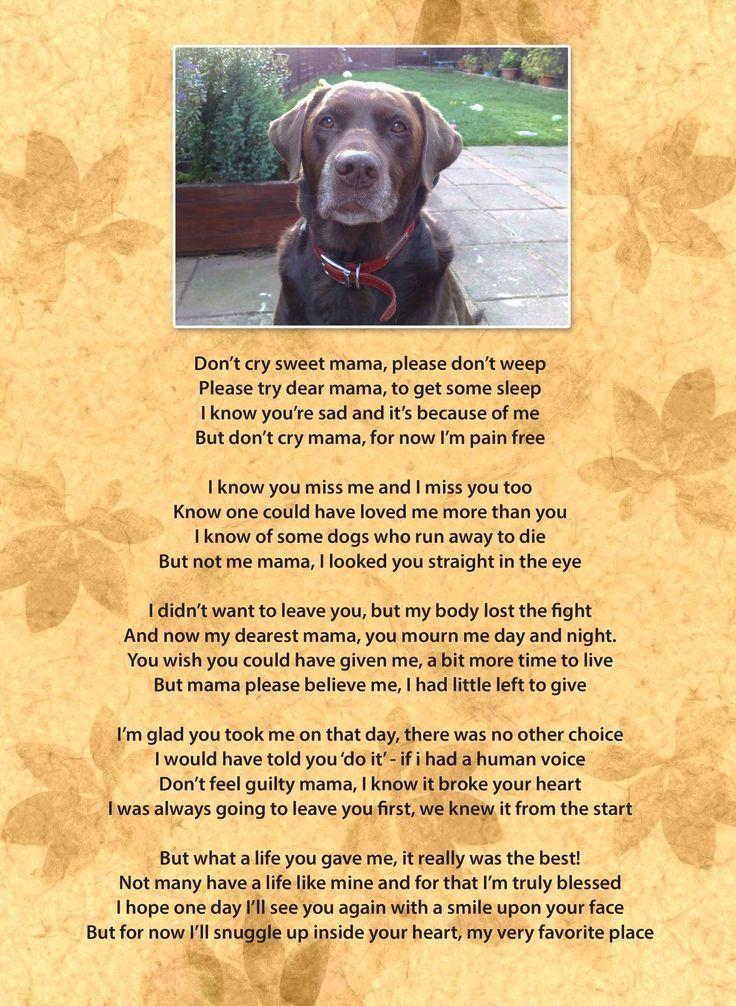 Dont Cry Mama Pet Loss Cães Animais Filhotes Animais
