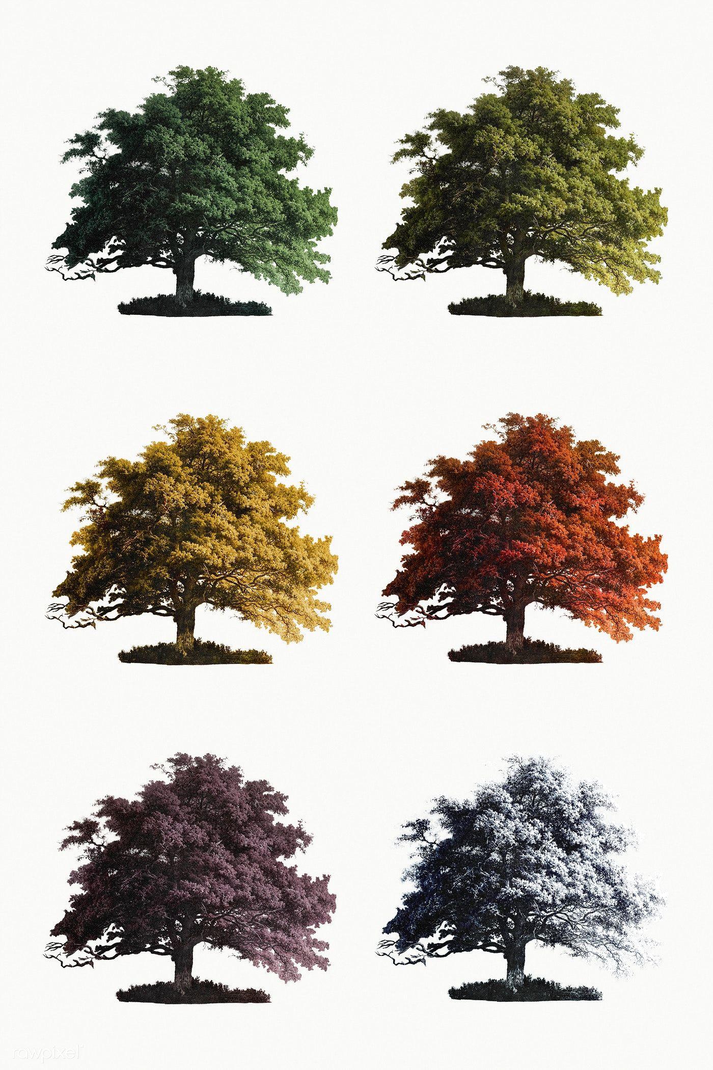 Download Premium Illustration Of Set Of Vintage Oak Trees Mockup 2187034 Tree Illustration Tree Drawing Oak Tree