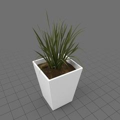 Plant in ceramic planter , #Affiliate, #Plant, #ceramic, #planter #Ad