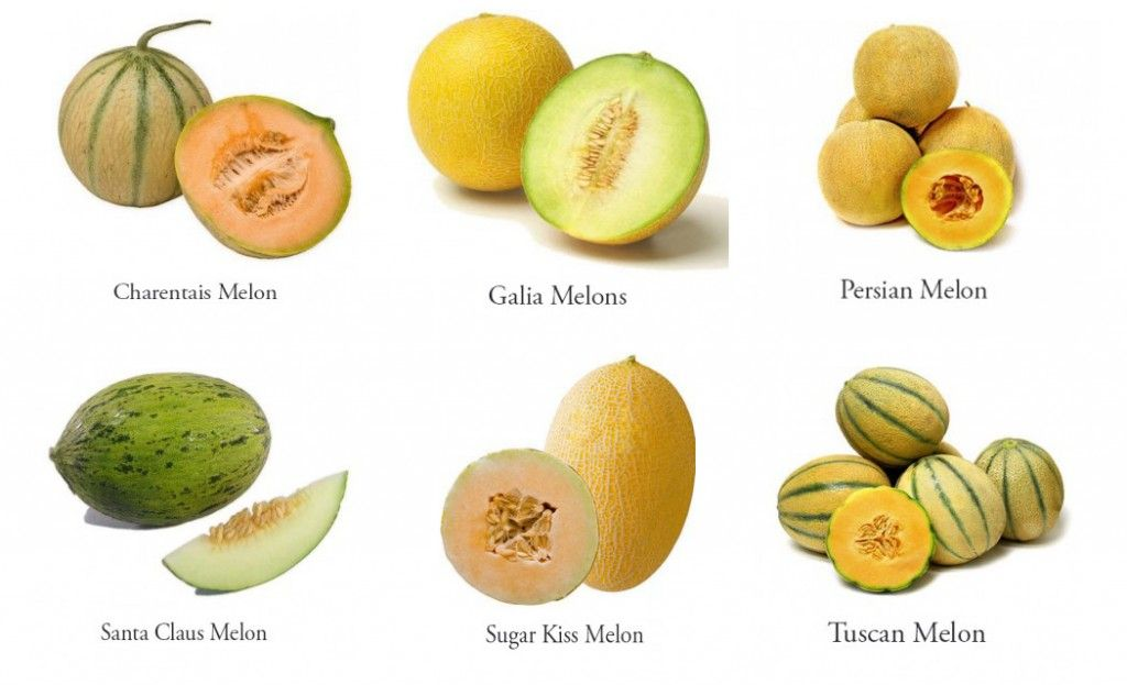 Meloniscious How To Pick And Eat Perfect Melons Cantaloupe Varieties Melon Cantaloupe These include honeydew, canary melons, and yes, cantaloupe. eat perfect melons