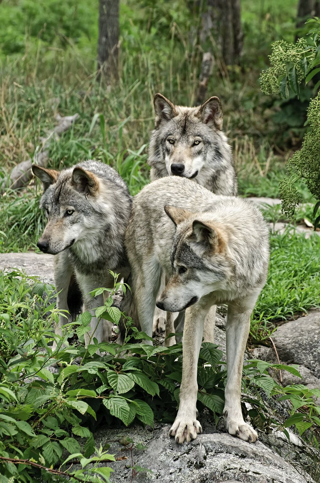 The Brat Pack By Destined2see Deviantart Com Wolf Dog Beautiful Wolves