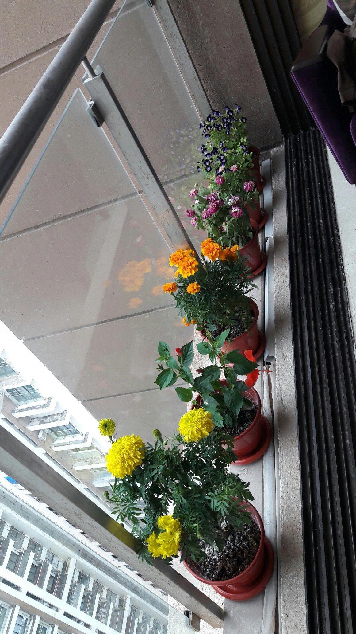 Pin by Rasika kothari on gardening India decor, Balcony