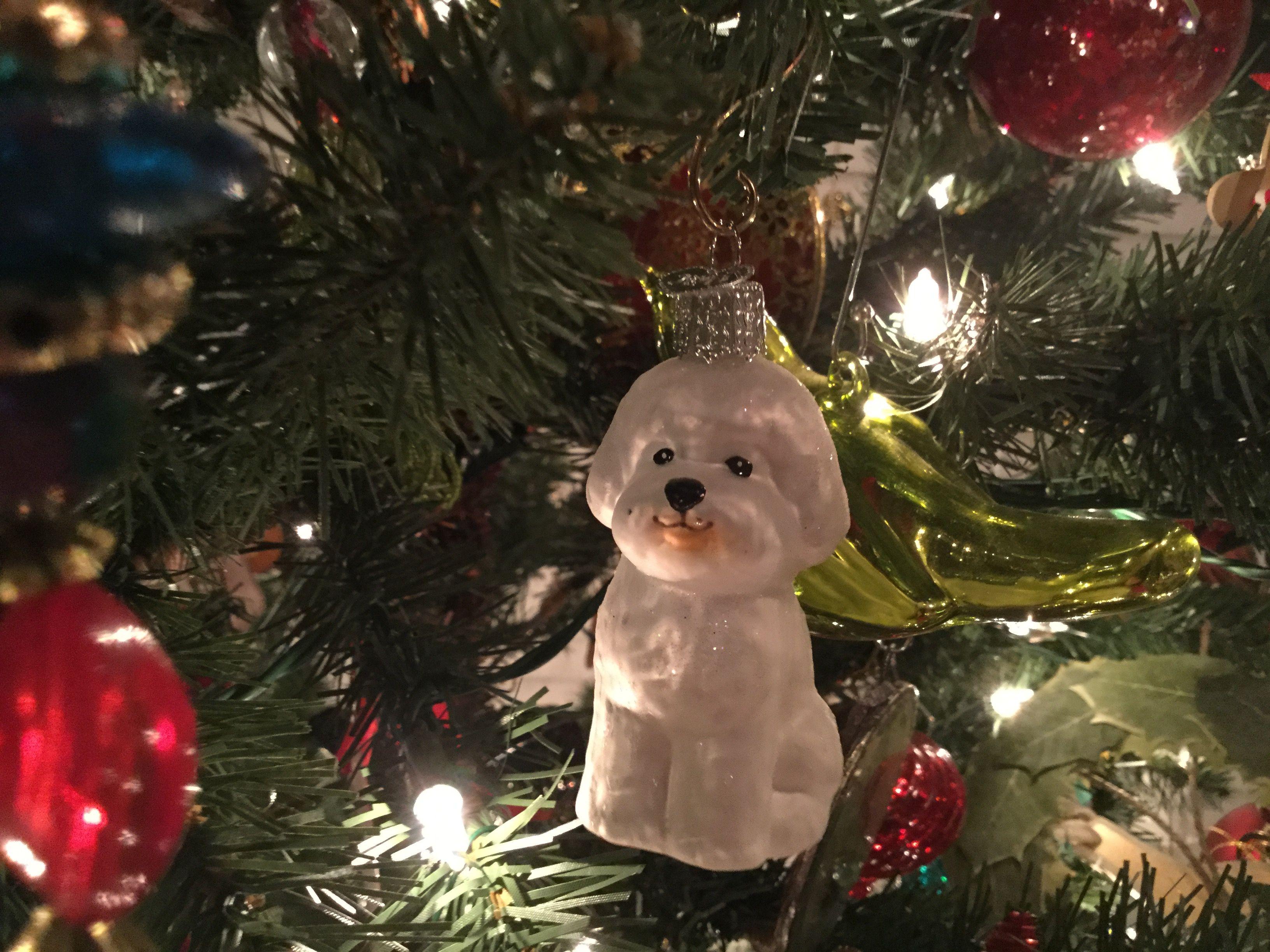 Pin by Jane Cameron on Bichons among us Christmas