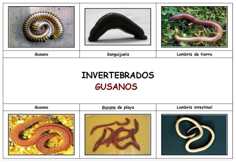 Pagina Web Vertebrados Lombrices Intestinales