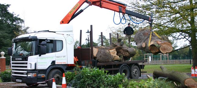 Arbor Master Tree Surgeons Provide Tree Care Services In Pinner