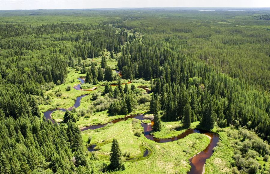 the history of the forest and forests in canada Learn about the ecological, economic, social and cultural importance of canada's boreal forest canada shares 30% of the global boreal forest the canadian.