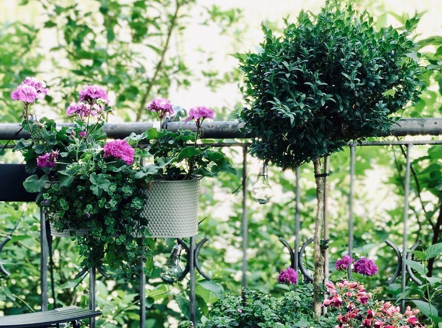 Jakie Rosliny Wybrac Na Balkon Poludniowy Zachodni Wschodni Sloneczny Plants
