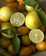 A list of cold hardy citrus trees.