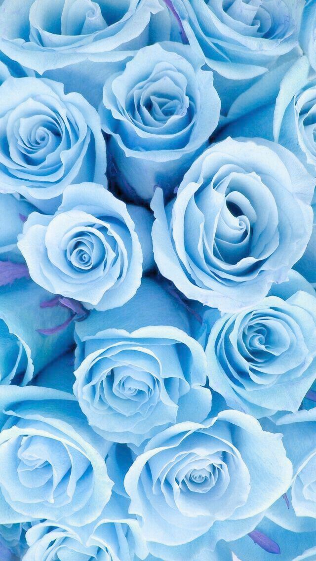 Girly Wallpapers For Iphone Xr Yet Gadgets In Rainbow Six Siege Off Cute Stitch Wallpapers Blue Wallpaper Iphone Blue Roses Wallpaper Flower Background Iphone