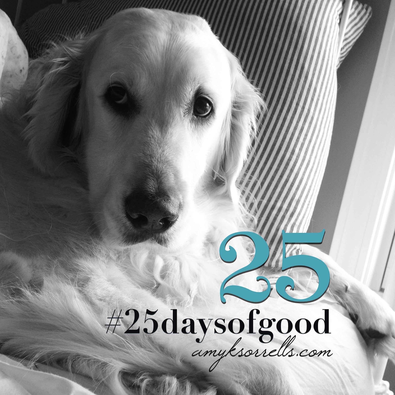 #25daysofgood. Find  Snap  Post  Visit my blog for details.