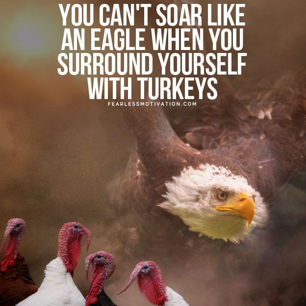 You Can T Soar Like An Eagle When You Surround Yourself With Turkeys Motivational Video Eagles Quotes Eagles Eagle Pictures
