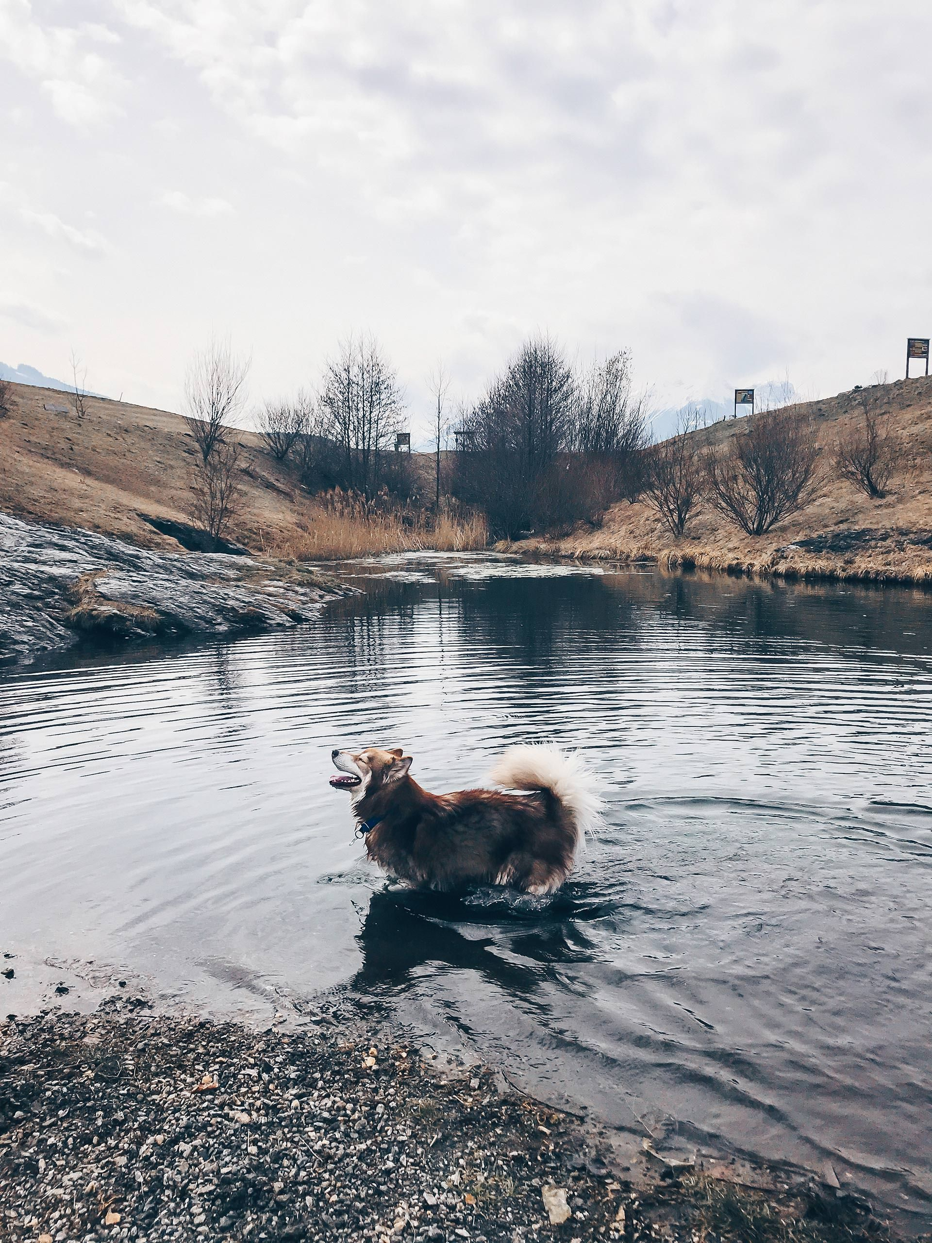 Unser Alltag Mit Hund 2 The Pawsome Tyroleans Sibirischer Husky Hunde Siberian Husky