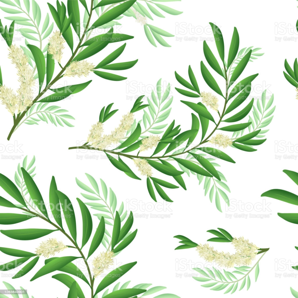 Tea Tree Branch Pattern With Flowers And Leaves Malaleuca Or Tea Composition Design Tree Images Tree Designs