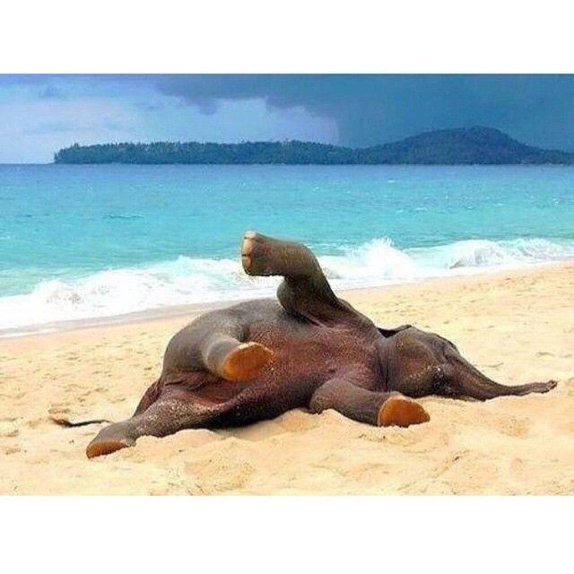 Baby Elephant enjoying the beach #TourThePlanet