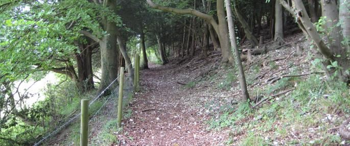 Wendy Tobitt - Woodland walk