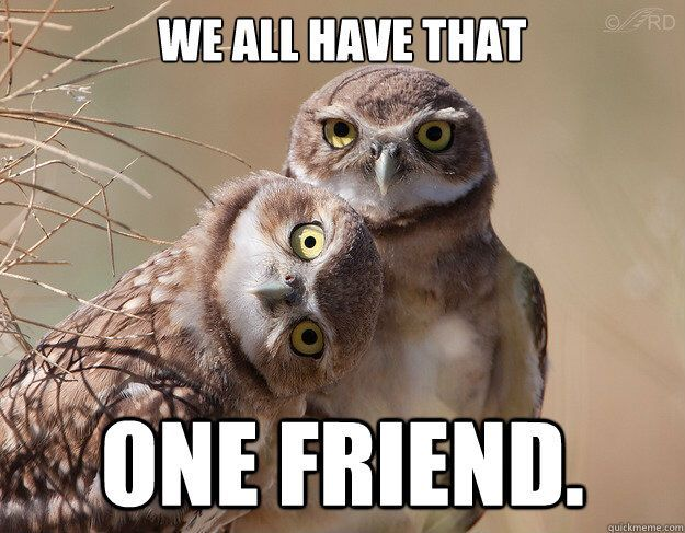 Pin By Ifus The Wolve On Funny Memes Funny Owl Memes Owl Photos
