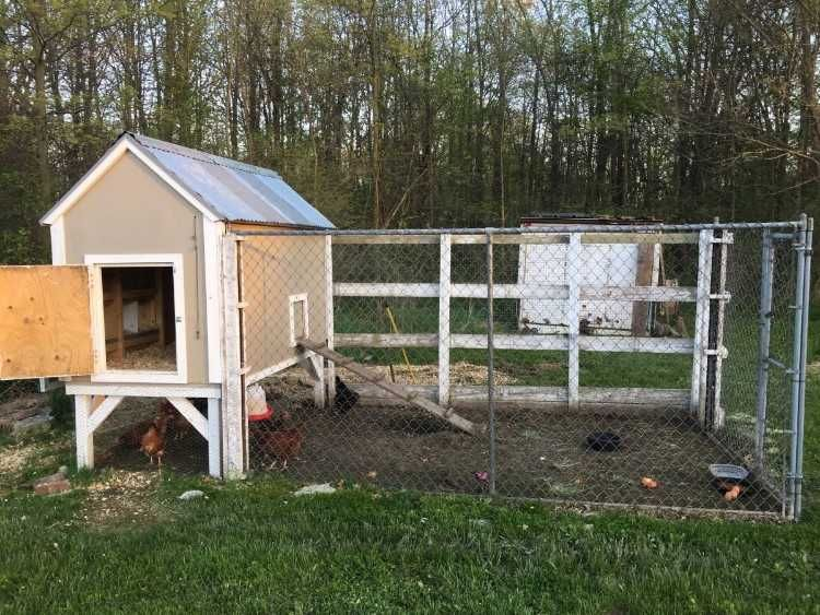 4x8 Chicken Coop With 8 Hens That Are Less Then A Year Old And 2