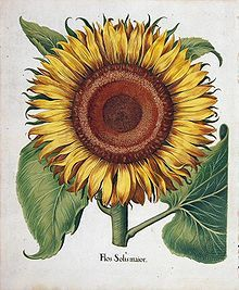 Hortus Eystettensis – Wikipedia