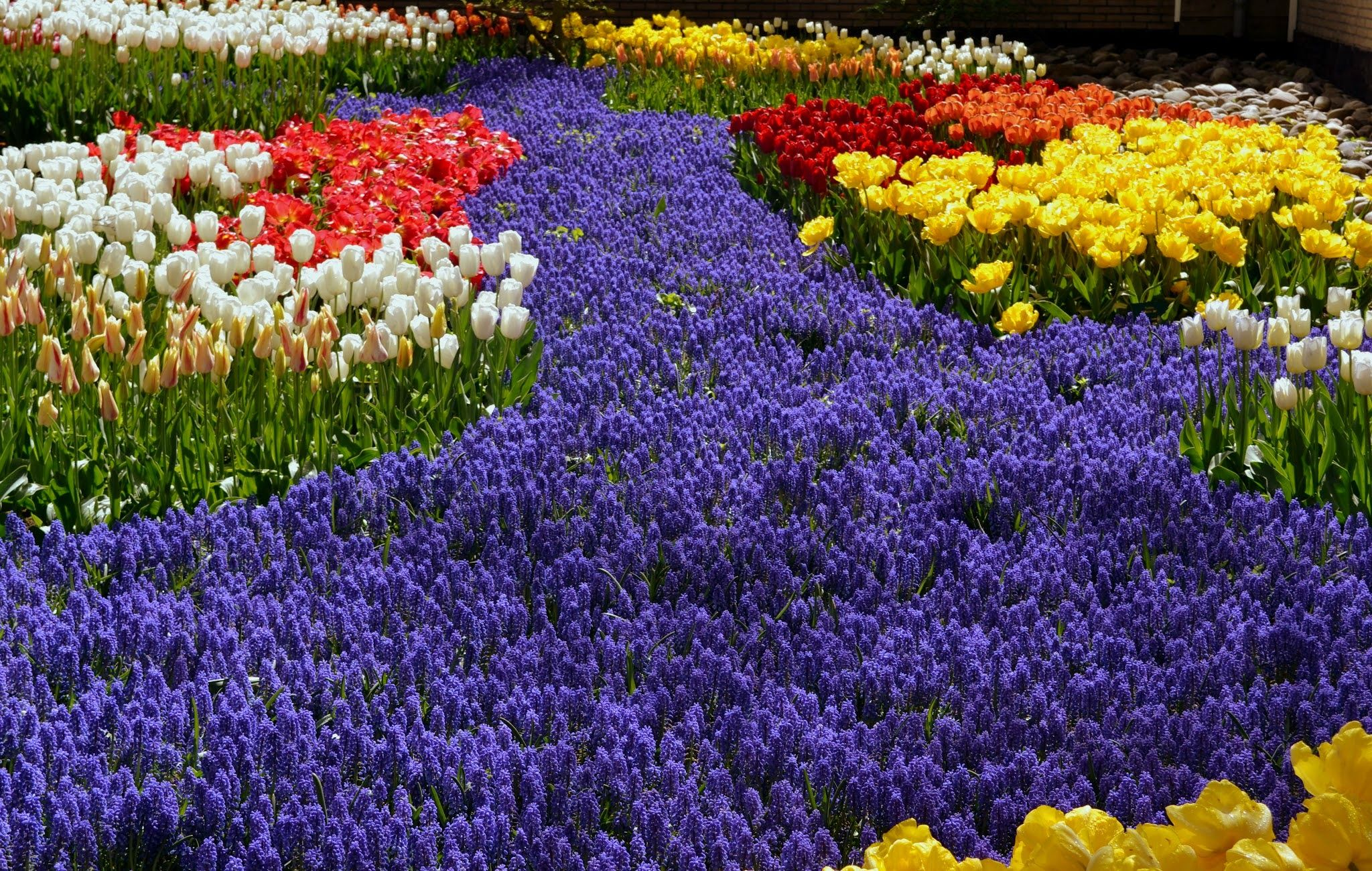 Sea of flowers beauty of nature seen in different colors of flowers sea of flowers beauty of nature seen in different colors of flowers izmirmasajfo Images