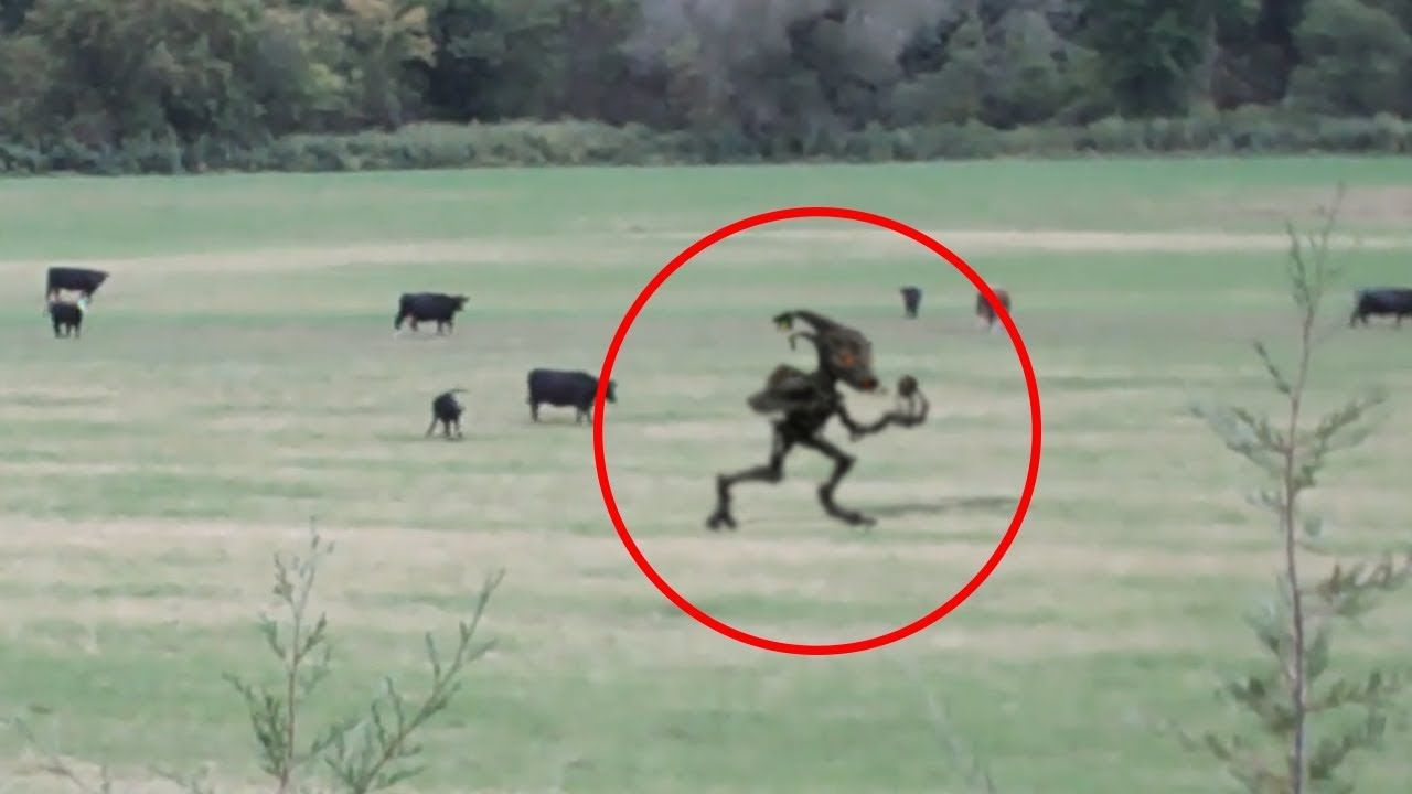 5 CHUPACABRA CAUGHT ON CAMERA & SPOTTED IN REAL LIFE! 2 ...