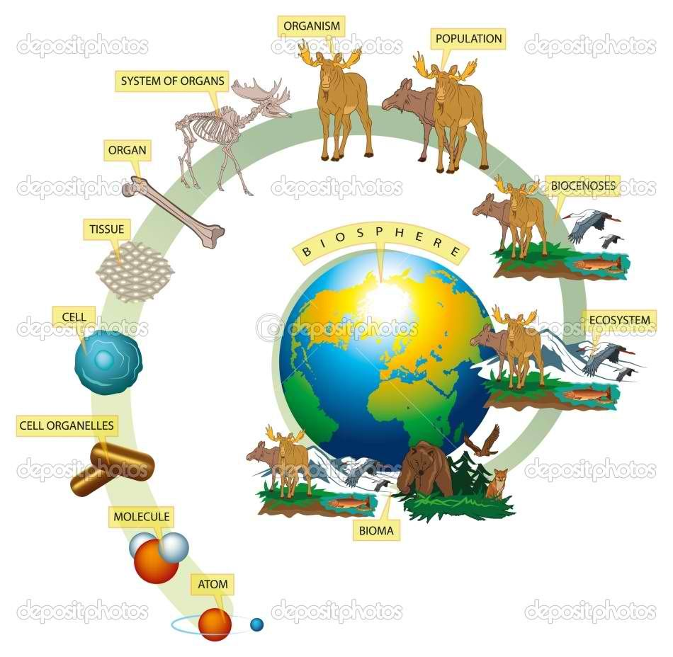 Levels Of Organization In The Living World Biology Lessons Biology Science Fair Projects Levels Of Organization Biology