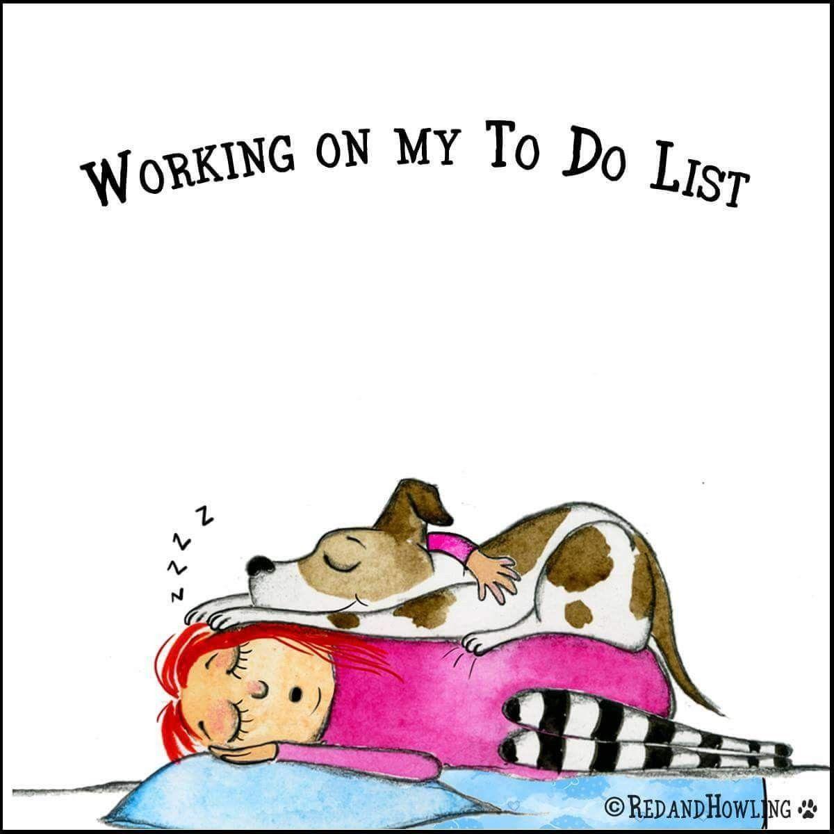 Pin By Adrienne Hendricks On Every Day Crazy Dog Lady Dog