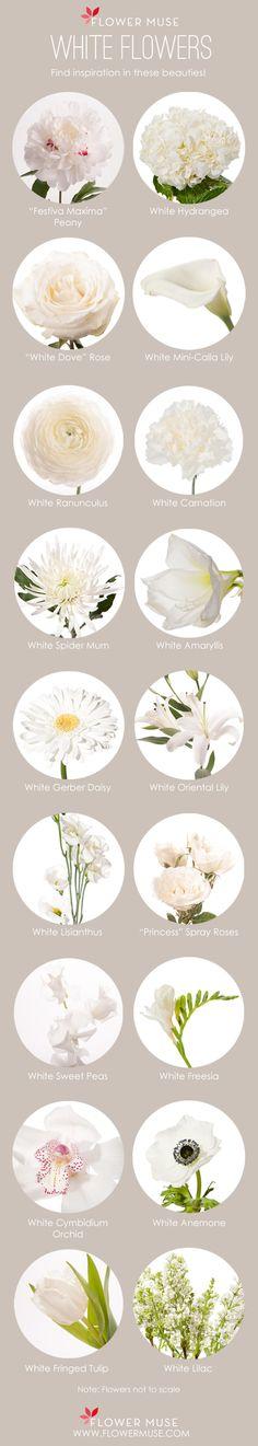 Flores brancas - nomes