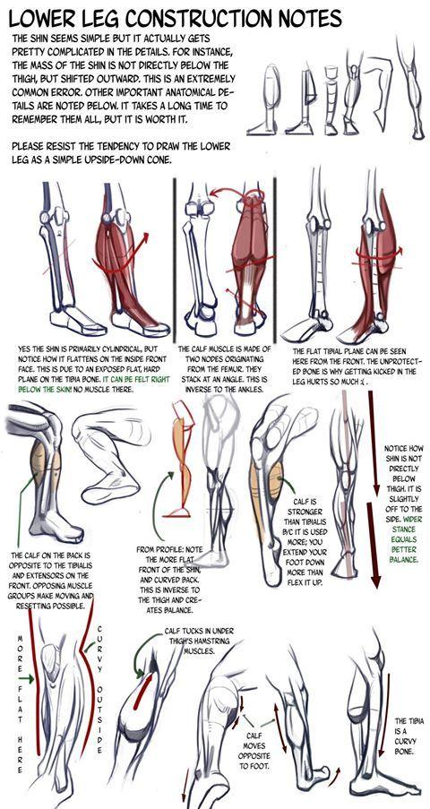 Lower leg construction