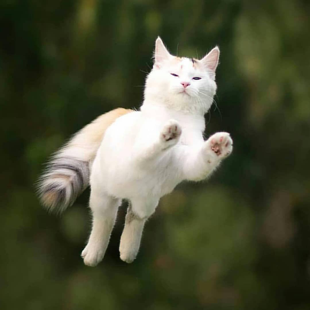 Flying Superhero Cat Caught On Camera Cute Cats Cute Animals Cats