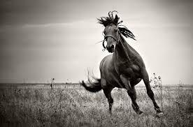 the horse 카지노사이트 ▶▶COM889.COM◀◀ 카지노사이트 카지노사이트 카지노사이트 카지노사이트 카지노사이트 카지노사이트 카지노사이트 카지노사이트 카지노사이트 카지노사이트 카지노사이트 카지노사이트 카지노사이트 카지노사이트 카지노사이트 카지노사이트 카지노사이트 카지노사이트 카지노사이트