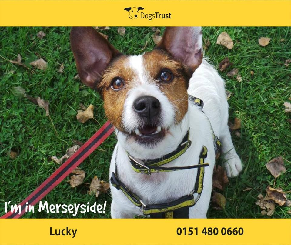 Little Lucky At Dogs Trust Merseyside Is A Gem And Has Lots Of Potential He Is A Typical Terrier And Has Bounds Of Energy So I Dog Waiting Dogs Trust Terrier