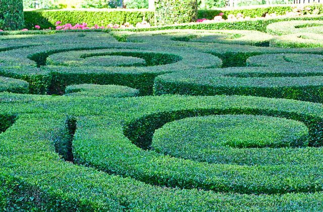 The hedges are a great example of curvilinear, because they flow in a smooth circle. Sue
