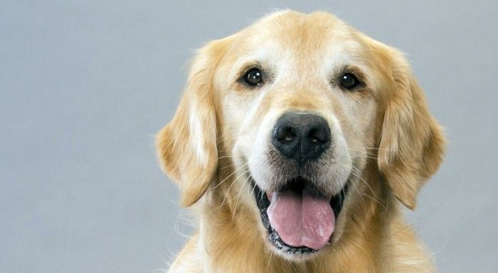 Beliebte Hunderassen Top 10 der Vierbeine 2017
