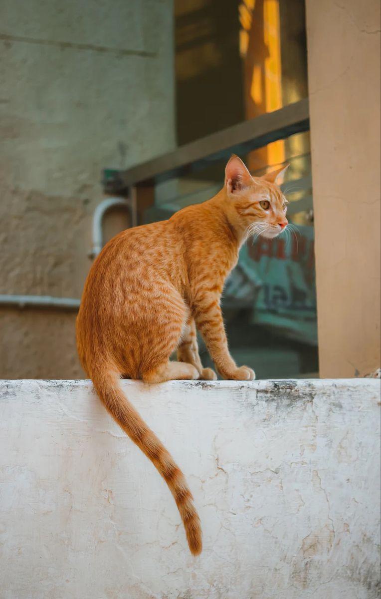 Insure my cat rightsure 5209175295 in 2021 cute cat