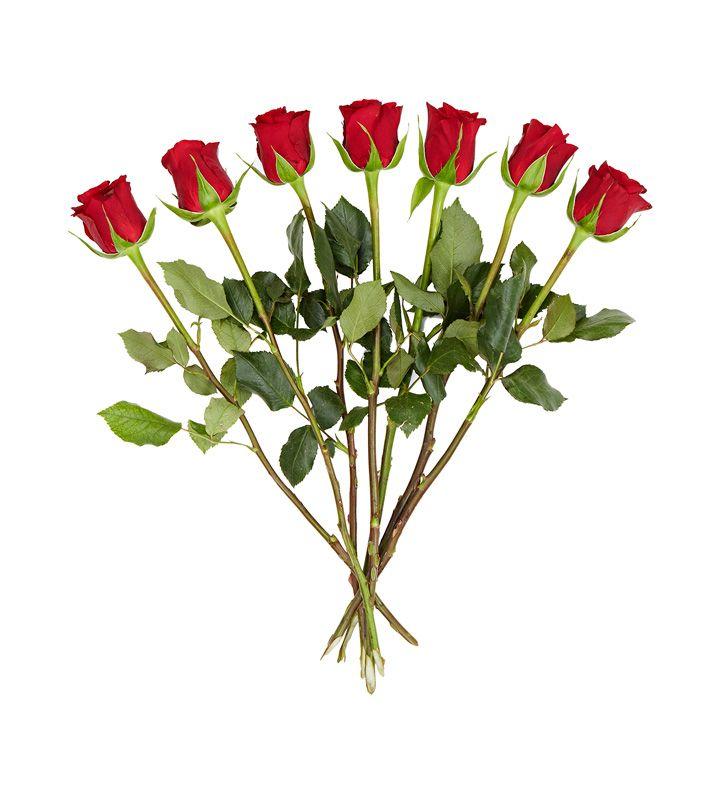 Punaiset ruusut 7 kpl nippu, 1,99 €. Plantagen, E-taso