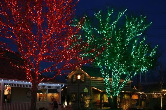 Green And Red Christmas Lights On Trees Outdoors