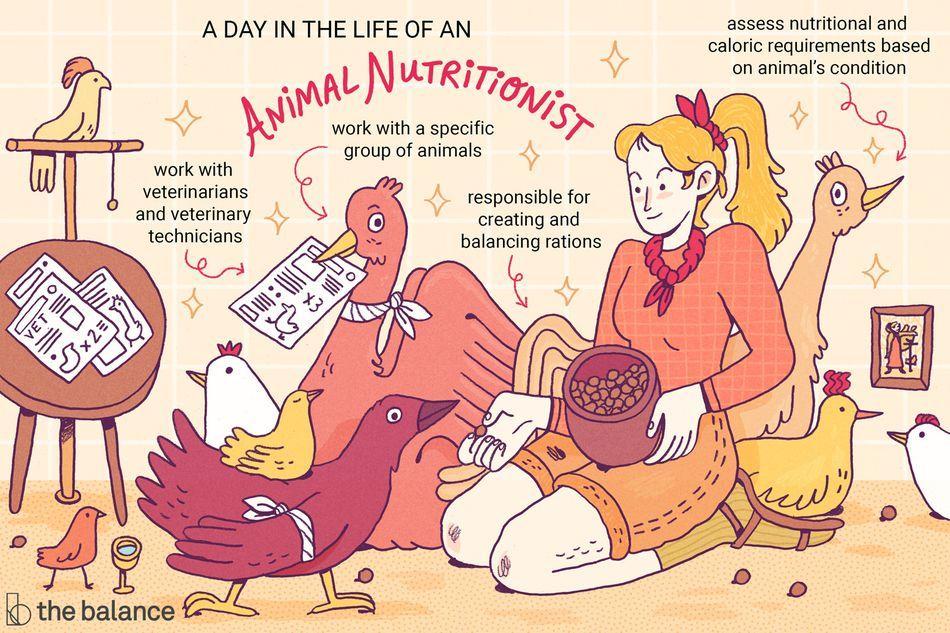 Animal Nutritionist Job Description Salary, Skills