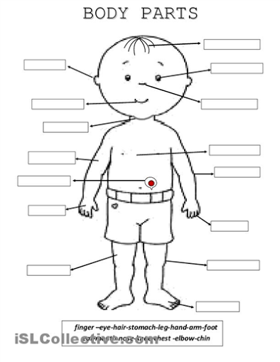 ESL Worksheets | BODY PARTS | Pinterest | Worksheets, English and ...