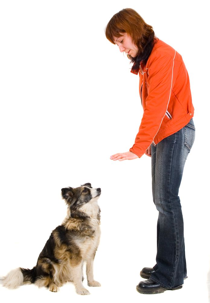 10 Handy Hand Signals For Deaf Dogs Deaf Dog Deaf Dog Training