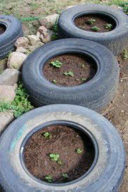 The Idiots Guide How To Grow Potatoes Potato Growing In Tires Tyres In The Ground In The Bedroom Growing Potatoes Growing Vegetables Tire Garden