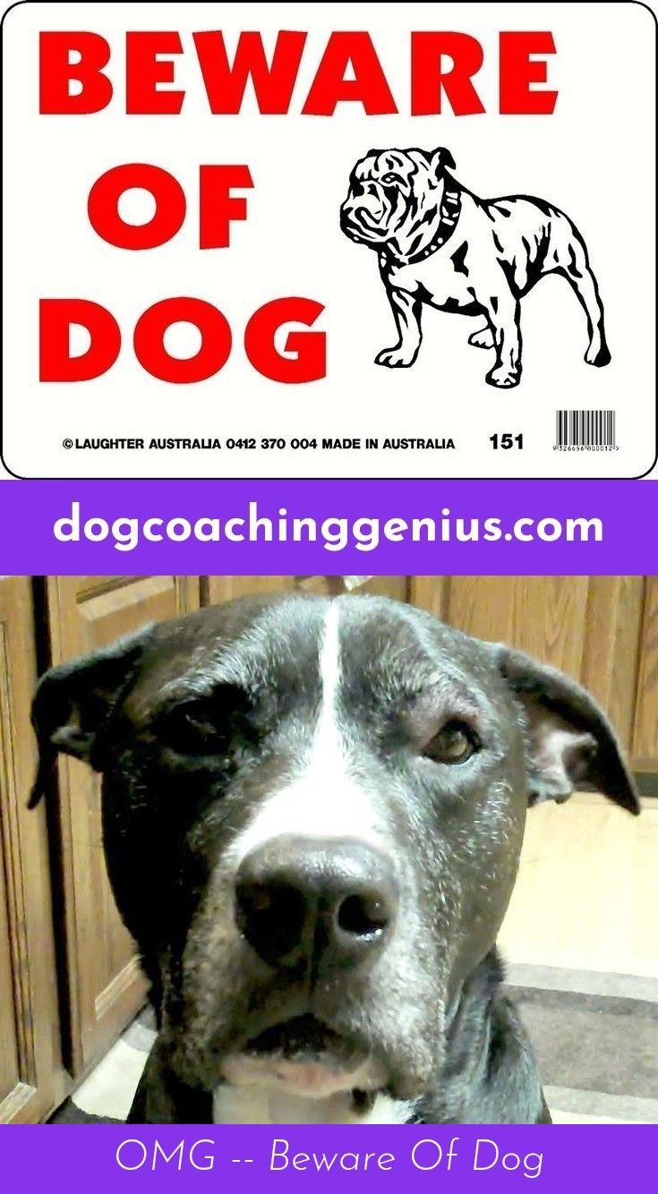 Check out the link to get more information dog growling diggity