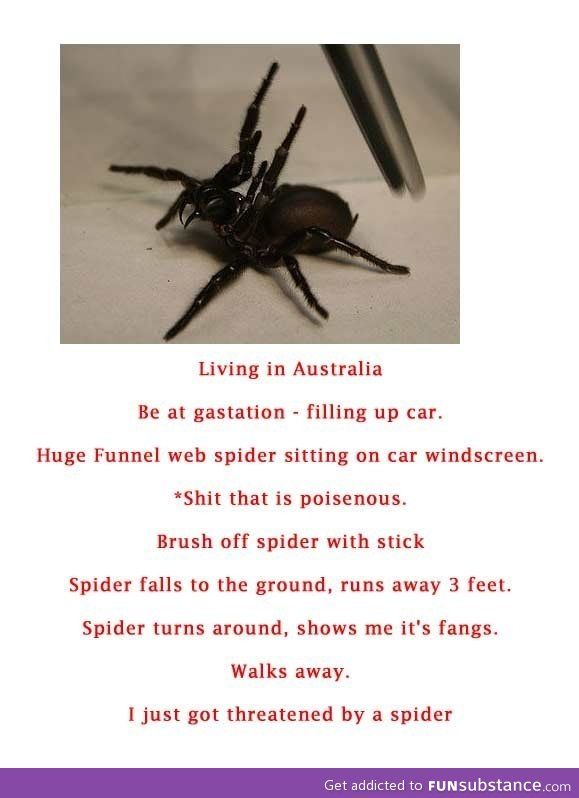 The spider threatened me