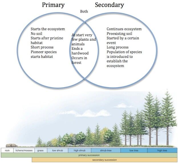 Primary vs secondary succession also hs eviron science rh pinterest