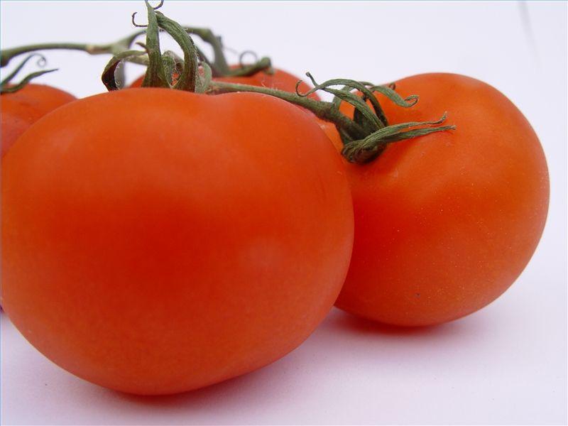 Homemade Tomato Fertilizer