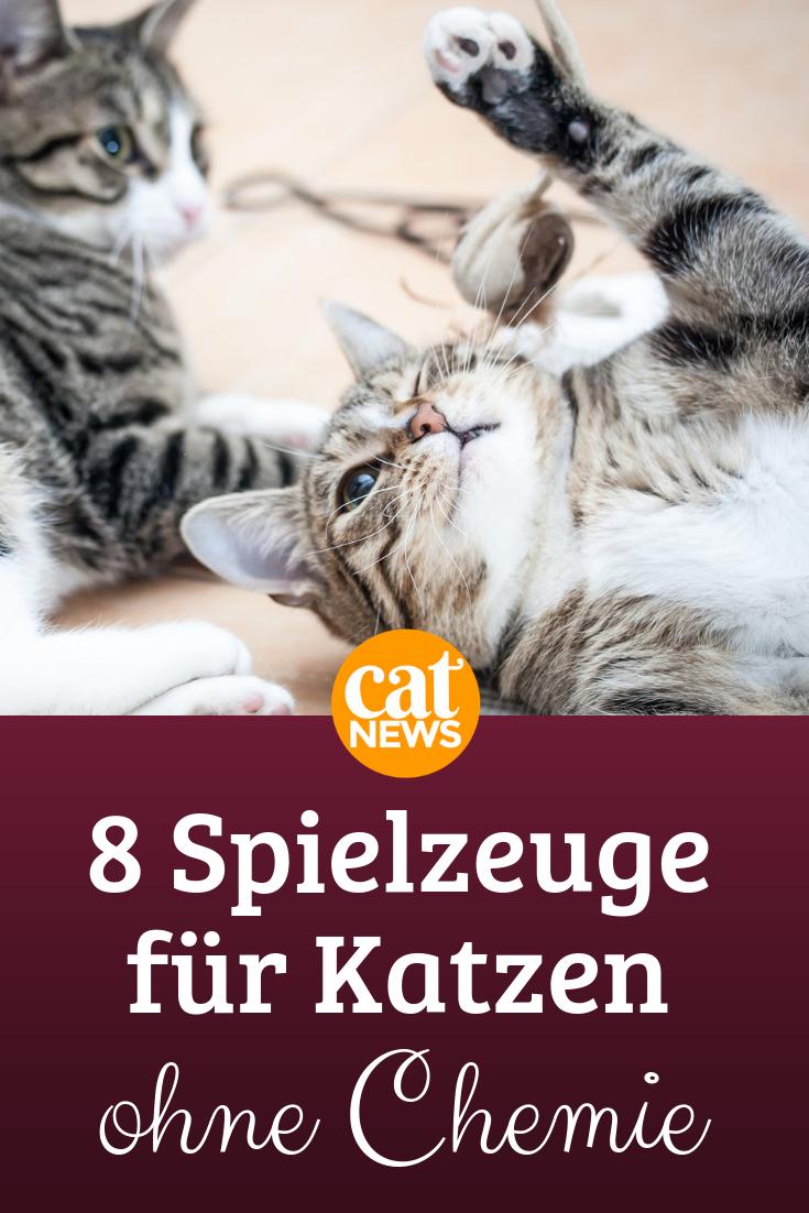 Okologisch Und Ungiftig Diese 8 Spielzeuge Fur Katzen Enthalten Keine Chemie Mit Bildern Katzen Spielzeug Katzen Katzenspielzeug