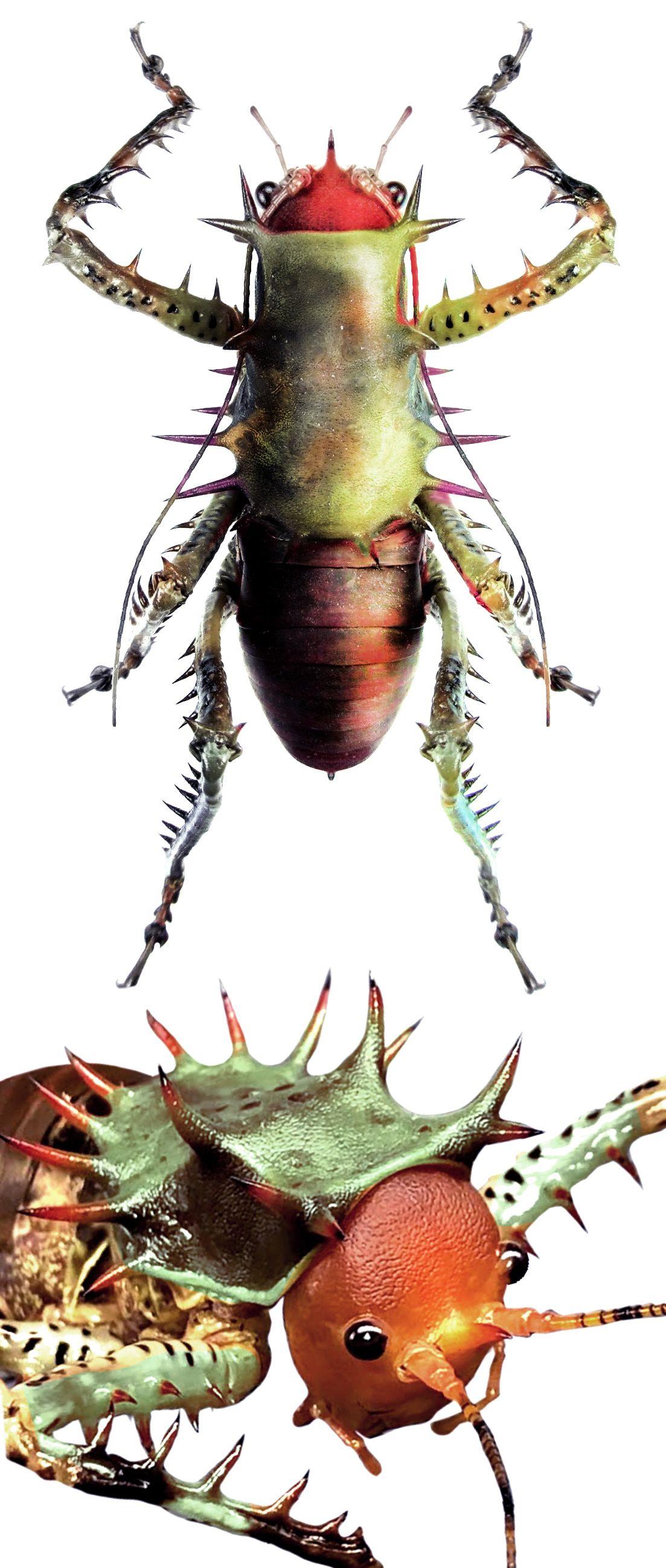Cosmoderus Erinaceus 動物 虫 猫